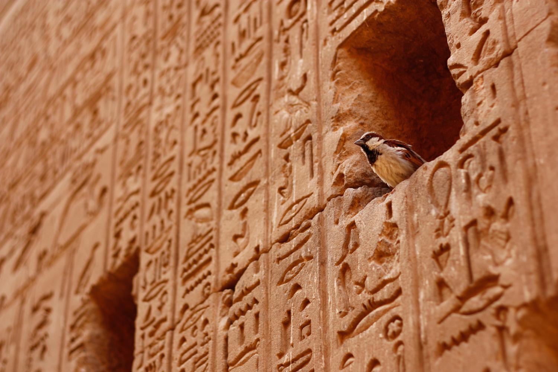 Ägypten 07