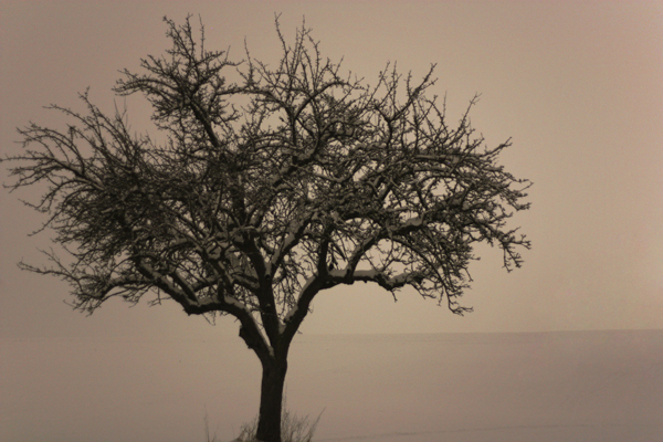 Baum Schwellenwert Original 01