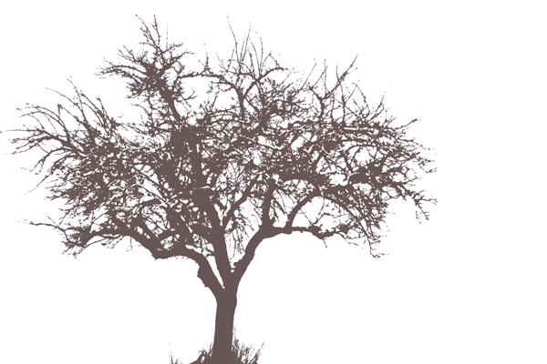 Baum Schwellenwert Vorschau 01