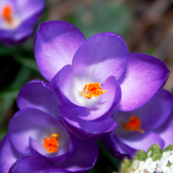 Frühlingskitsch 03