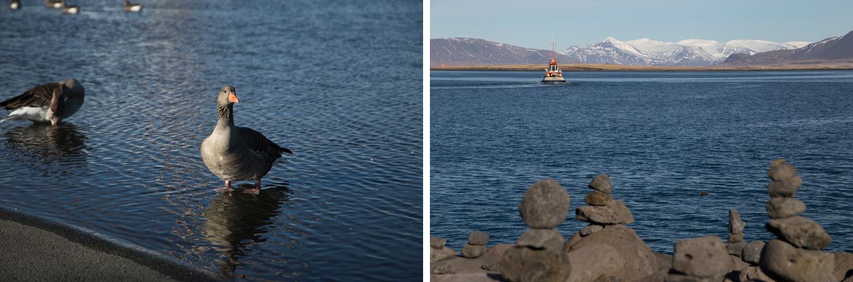 Links: Eine Ente steht in einem flachen Wasserbecken auf dem Vorplatz von Harpa, der Konzerthalle in Reykjavík. Rechts: Ein Boot entfernt sich von der Küste, wo Steinbrocken in mehreren kleinen Türmen aufgestapelt sind.