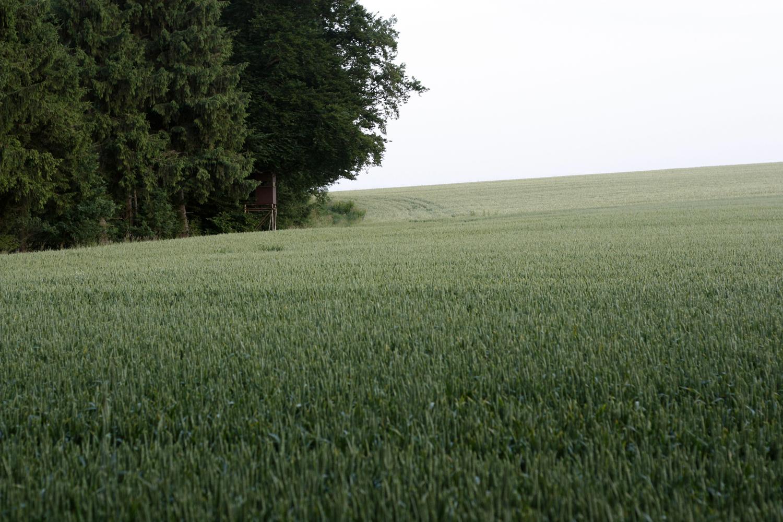 Wald 07