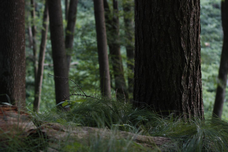 Wald 08