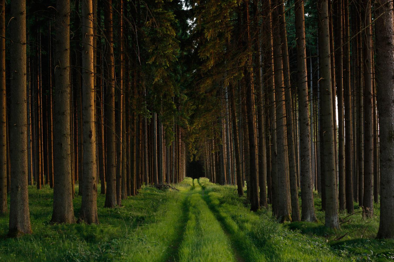 Wald im Abendlicht 01