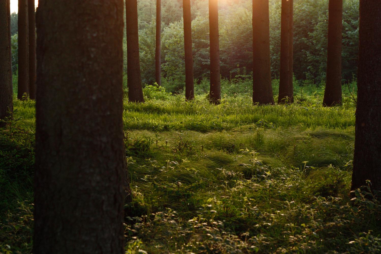 Wald im Abendlicht 02