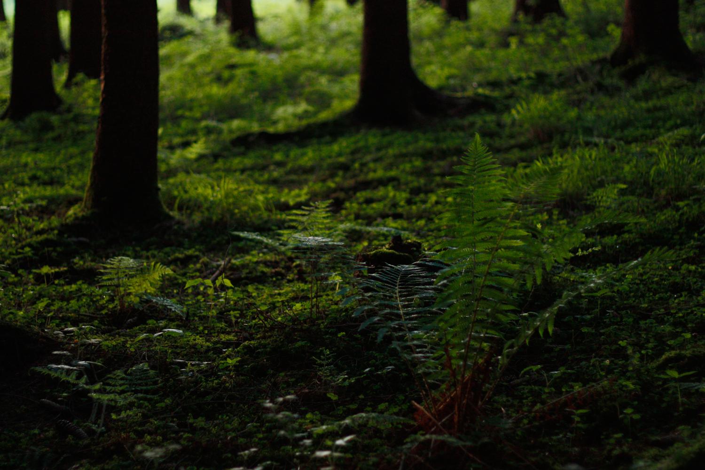 Wald im Abendlicht 03