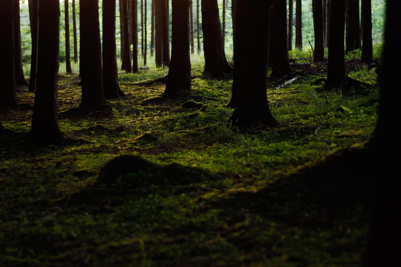 Wald im Abendlicht 04