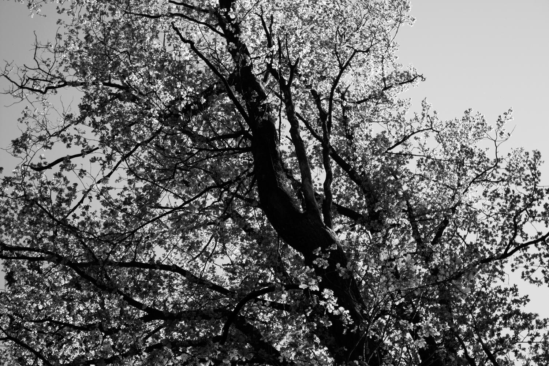 Wald in Schwarzweiß 02