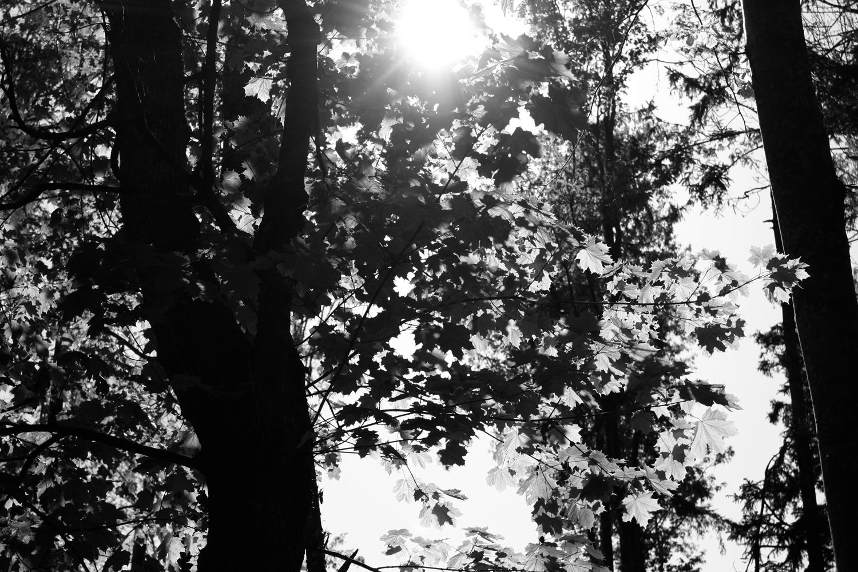 Wald in Schwarzweiß 04