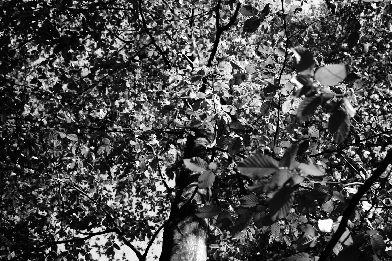 Wald in Schwarzweiß 06