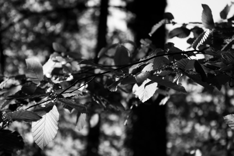 Wald in Schwarzweiß 07